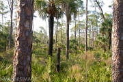 Everglades 6
