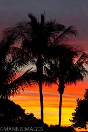 Palm Trees Sunset 1
