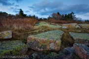 Cadillac Mountain Moss 2