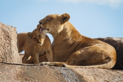 Mother's Love 1