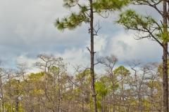 Everglades 2
