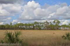 Everglades 4