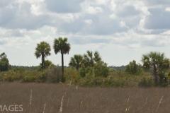 Everglades 5