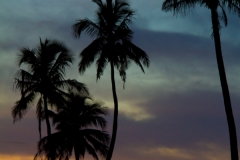 Palm Trees Sunset 2