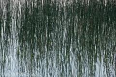 Reeds 3