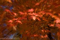Leaf Blur