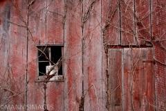 Old Barn 6