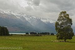 Sheep Ranch 2