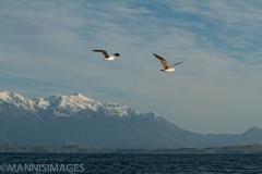 Tasman Sea 1