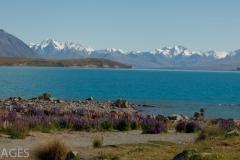 Lake Tekapo